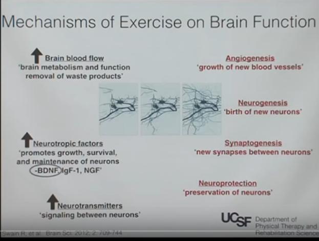 Allenare il cervello: la connessione cervello-corpo nella riabilitazione neurologica